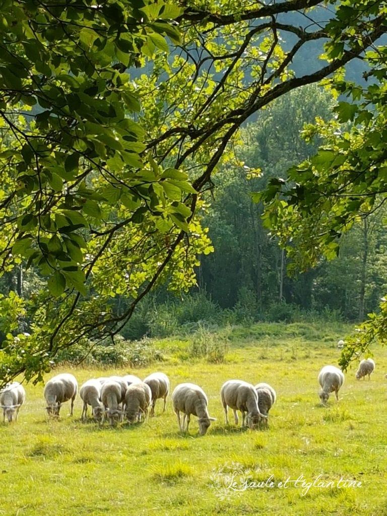 La bergerie sur la colline